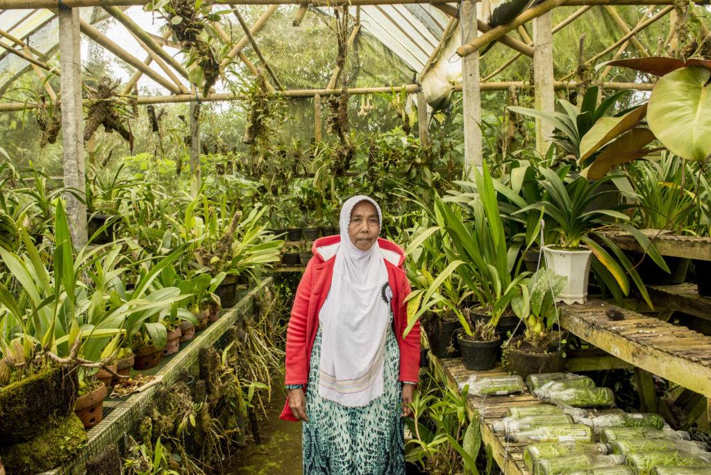 Vivaio all'ingresso del Botanical garden, Kabupaten Tabanan