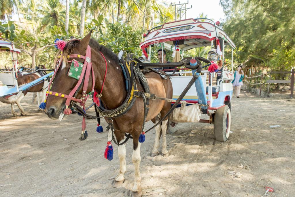 Il mezzo di trasporto a Gili Air: carretto trainato da un cavallo